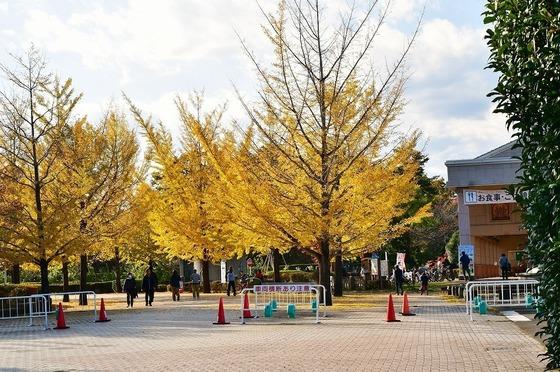 2019-11-16  A-Resized  秩父ミューズパーク‥ (16).jpg